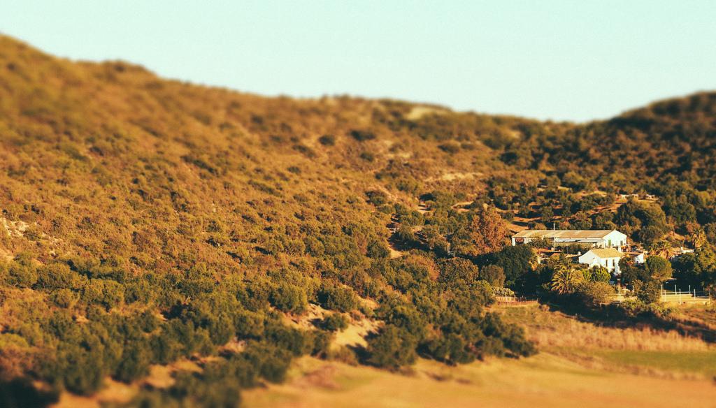 Olīvu ferma ielejā